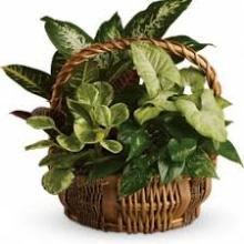 Designer\'s Choice Green Planter