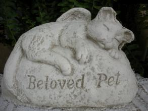 Beloved Pet for Cat