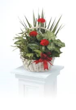Planter with Fresh Cut Red Flowers