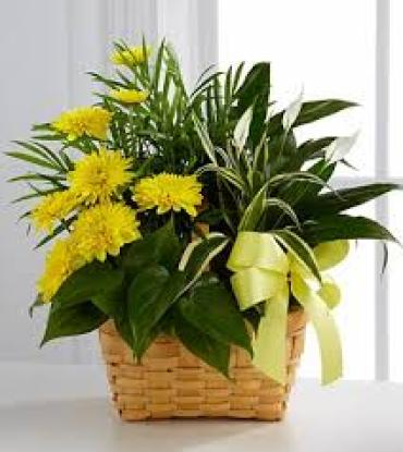 Planter with Fresh Cut Yellow Flowers