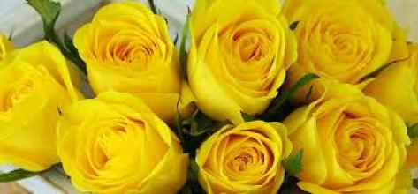 9 Yellow Roses